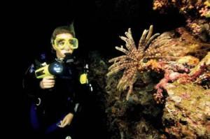 Plongée de Nuit à Dour le jeudi 4 octobre